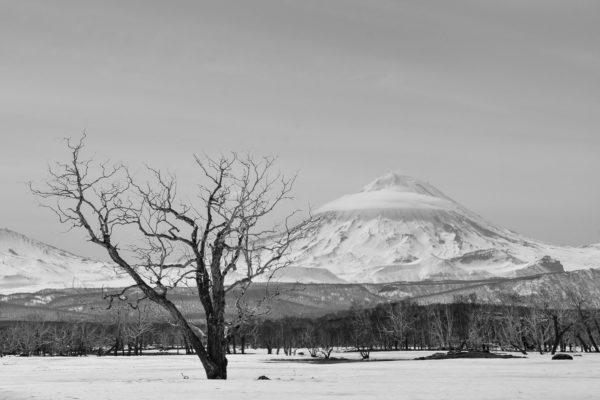 Koryaksky volcano from the north, Kamchatka.