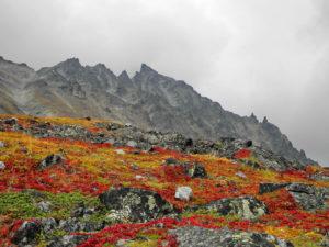 Autumn colours of Kamchatka.