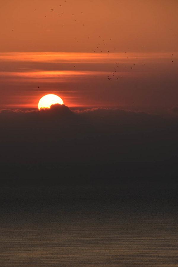 Sunrise and birds, Sardinia.